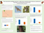 Risk Assessment and Flight Decisions in Adult versus Juvenile Squirrels (Sciurus  carolinensis)